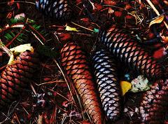 Spruce carpet