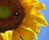 il simbolo dell'estate