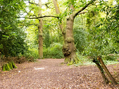 Woods at Eastham