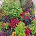 Prachtvolle Blumenbeete auf der BUGA in Erfurt