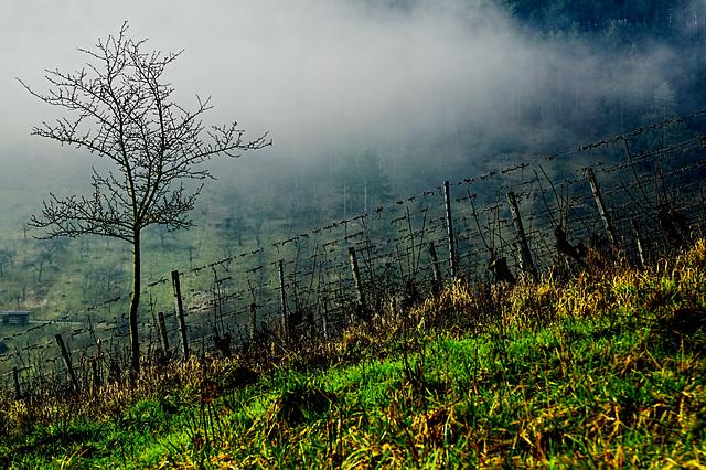 Ein Loch im Nebel - A hole in the fog