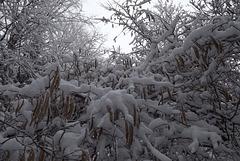 Ill neige branche
