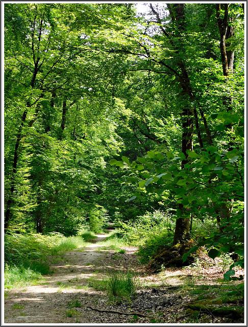 Balade en forêt de Coetquen