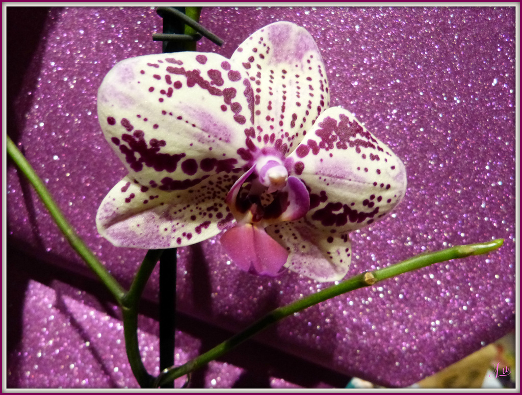 ** Mon orchidée **