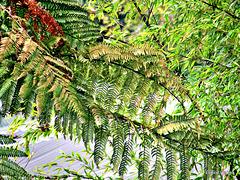 Leaf Combo.