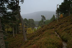 Near Lui Bridge, Braemar