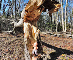 A Closer Look At Destroyed Tree
