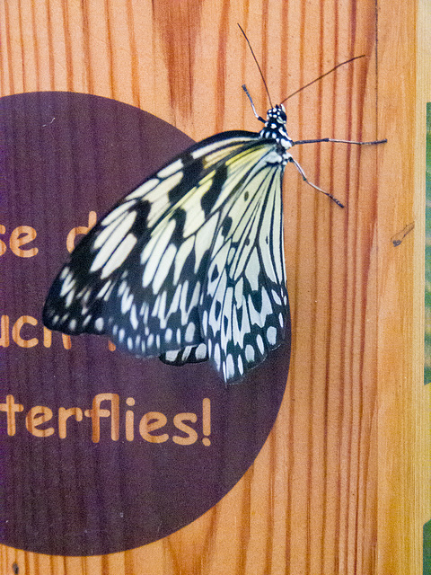 Butterfly house5, Chester zoo