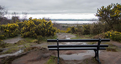 Thurstaston Hill, a bench with a view
