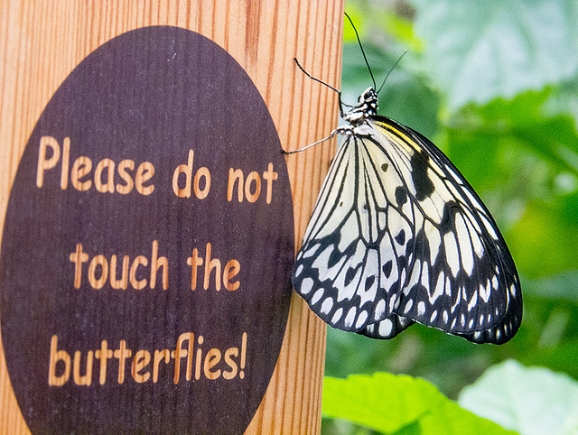Butterfly house7