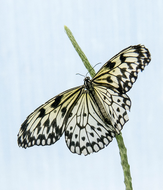 Butterfly macro (1)