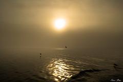 Brouillard du matin-2