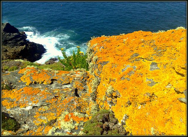Startling orange lichen