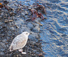 Gull and water in Polperro