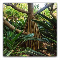 Jardín Botánico - XIII