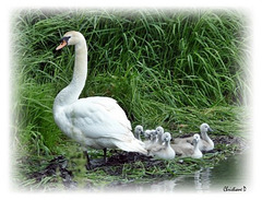 La petite famille ...  ***  The little family ...