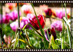 Spring Flowers at Lacock Abbey