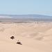 Algodones Dunes / gold squared / Thanksgiving 2020 (# 0602)