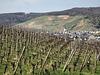 Blick aus den Bachemer Weinbergen nach Ahrweiler