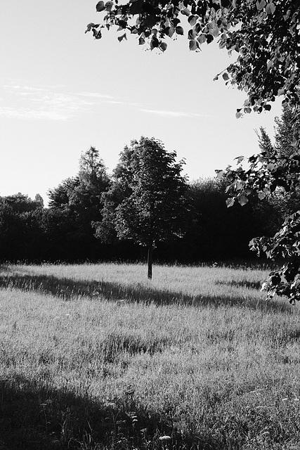 Morning walk through the Meentpark, De Meern