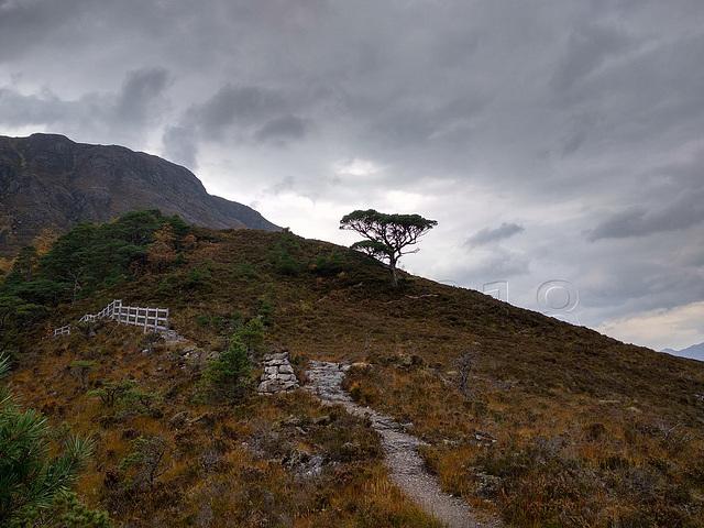 Mountain Trail, Beinn Eighe National Nature Reserve