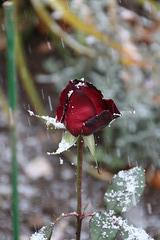 Первый снег. Première neige.
