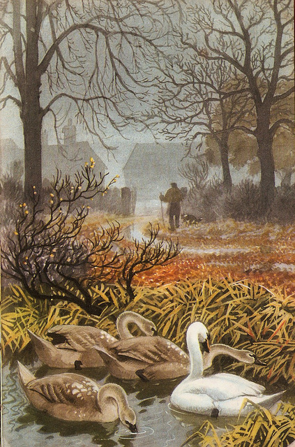 Mute swan & cygnets.