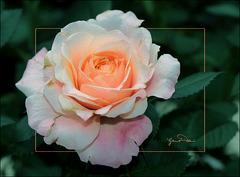 Aging gracefully ~ Vieillir en beauté