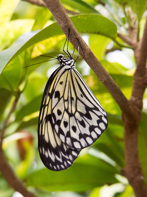 Chester zoo butterfly house. (1)