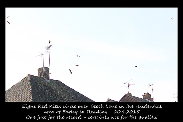 Red Kites over Earley - Reading - 20.4.2015