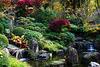 Eine grüne Oase für die innere Ruhe - A green oasis for inner peace and quiet