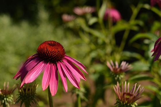 Jolie fleur...