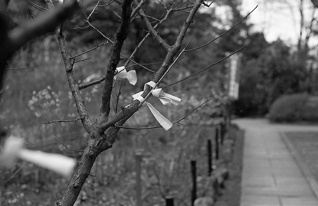 Paper fortunes tied to tree branches