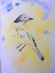 Aquarelle : L'oiseau jaune
