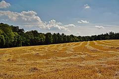 Die Ernte ist vorbei -Harvest is Over