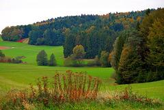 Wald und Wiese Herbst