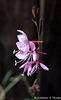 Eureka Springs Flower #6 - Unknown