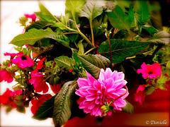 Fleurs  ma passion...