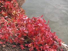 Осенние краски Софиевки / Autumn colors of Sofievka
