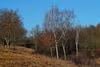 Bei den drei Birken - At the three birches