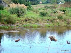Manunui River,