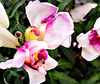 Wishbone Flowers.