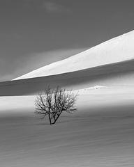 Berk in de sneeuw - Birch in the snow