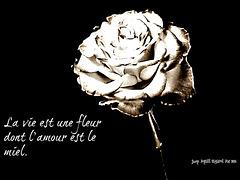 La vie est une fleur dont l'amour est le miel.