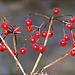 Rote Früchte ...