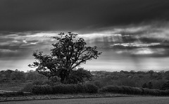 tree with rays