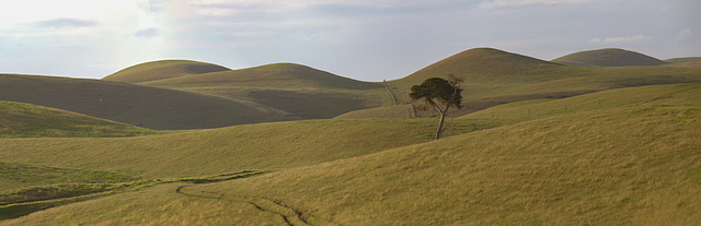 Lone Tree on a grassy landscape