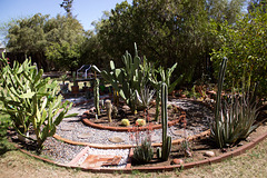 Cactus garden progress 3/29/16