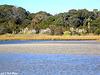 Iconic Shoreline Forest, Marsh, & Swale