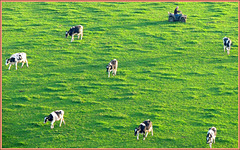 Seven Cows , and a Lazy Farmer
